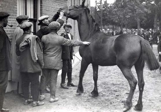 Paardenmarkt Geldermalsen